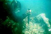 A diver explores the ruins