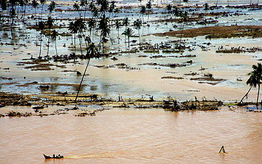 Flooded fields in North Sumatra, Indonesia